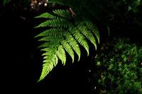 Zur Detailbeschreibung der Fotoreise Lightpainting im Teufelsmoor