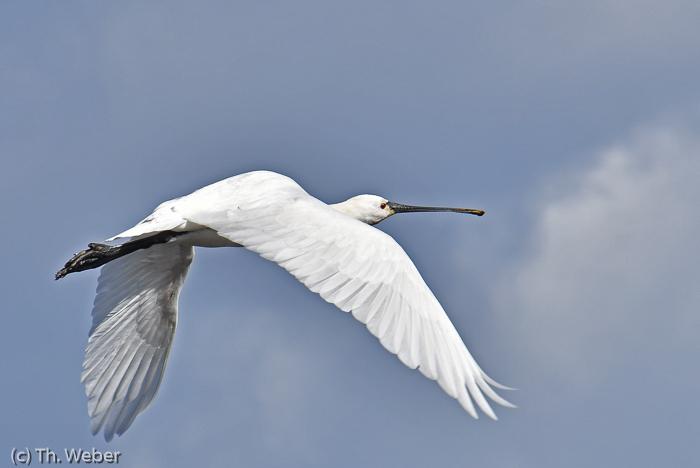 Teilnehmerbild der Fotoreise Fotoreise Fuerteventura Tierfotografie