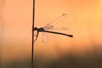 Beispielbilder zur Fotoreise Libellenfotografie