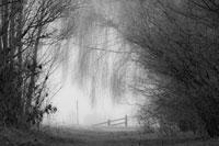 Beispielbilder zur Fotoreise Schwarzweissfotografie im Teufelsmoor