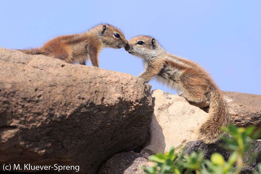 Beispielbild zur Fotoreise Fuerteventura in Spanien
