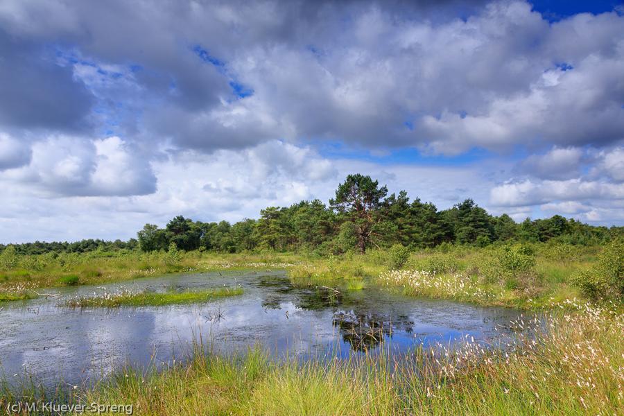 Beispielbild zur Fotoreise Makro im Moor in Worpswede