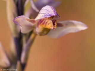 Beispielbild zur Fotoreise Orchideenfotografie  auf Sardinien
