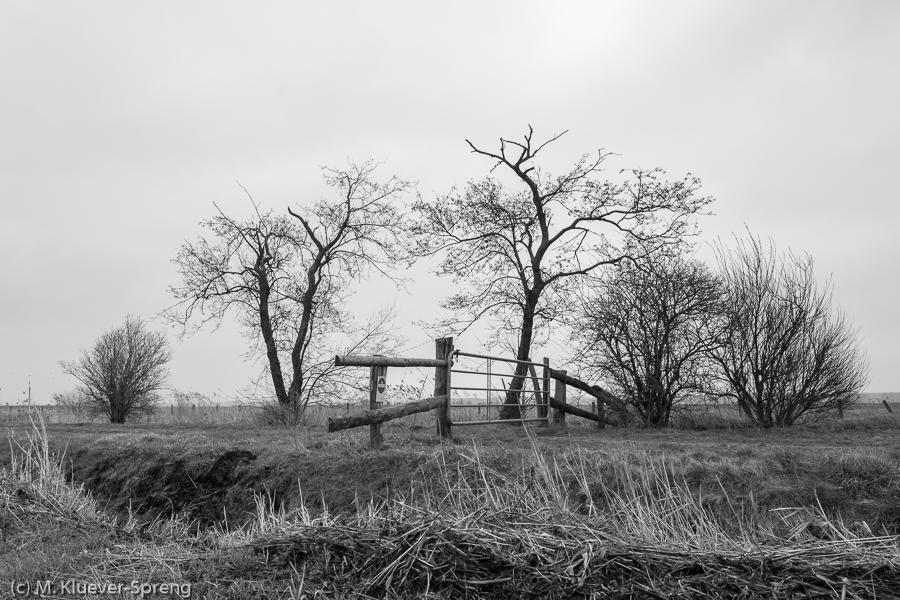 Beispielbild zur Fotoreise Schwarzweiss Fotografie im Teufelsmoor