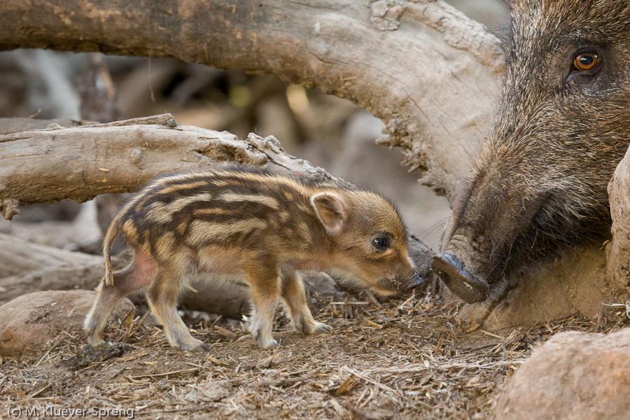 Beispielbild zum Fotokurs Tierfotografie Basiswissen