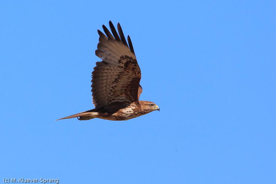 Beispielbild zum Fotokurs Wildlifefotografie auf Sardinien