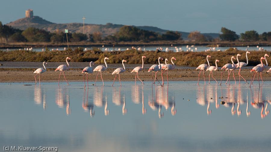 Beispielbild zur individuellen Fotoreise Wildlifefotografie auf Sardinien