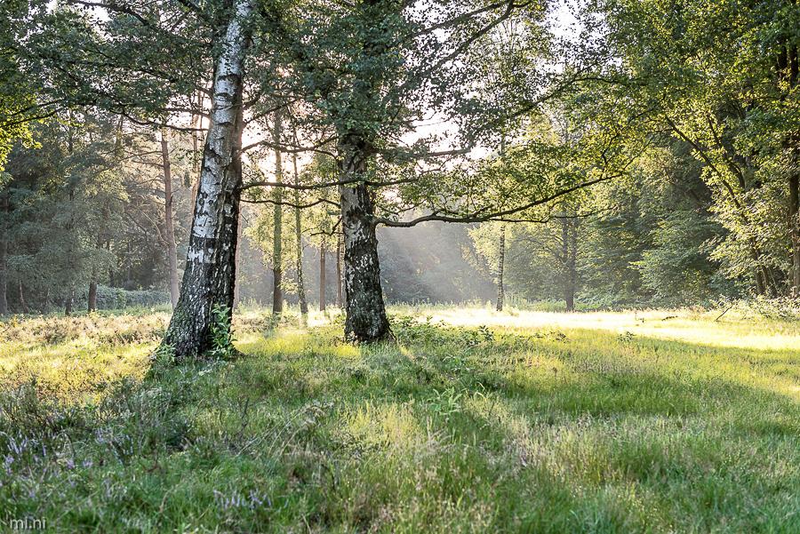 Teilnehmerbild der Fotoreise Teufelsmoor im August 2017