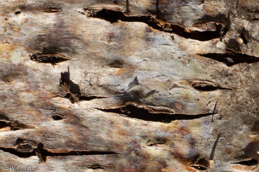 Teilnehmerbild der Fotoreise Makro im Moor in Worpswede