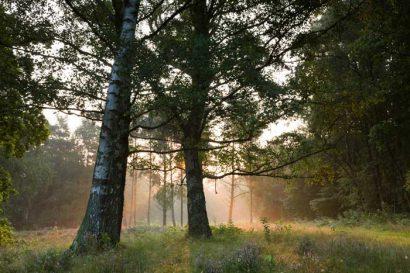 Fotoreise Teufelsmoor Worpswede