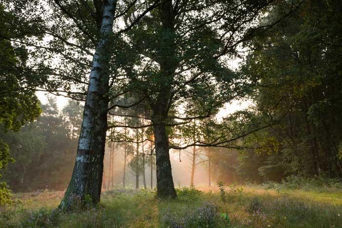 Fotoreise Deutschland, Worpswede magisches Licht im Moor