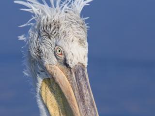 Beispielbild zur Fotoreise Wildlife Fotografie in Griechenland
