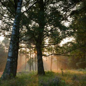 Fotoreise magisches Licht im Teufelsmoor