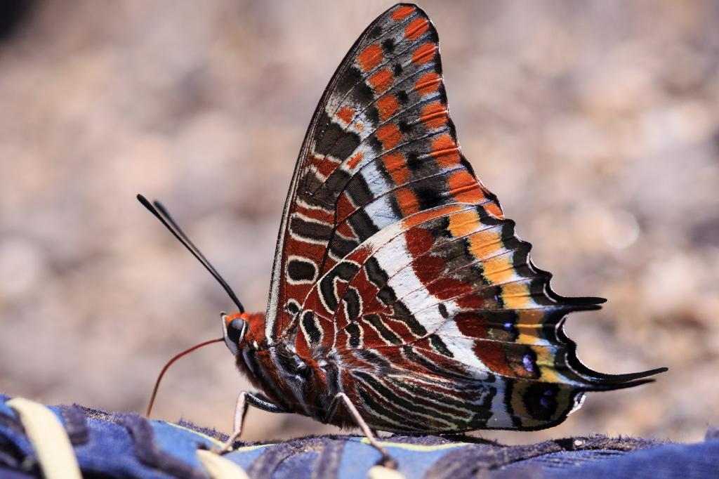 Beispielbild zur Fotoreise Schmetterlinge auf Sardinien